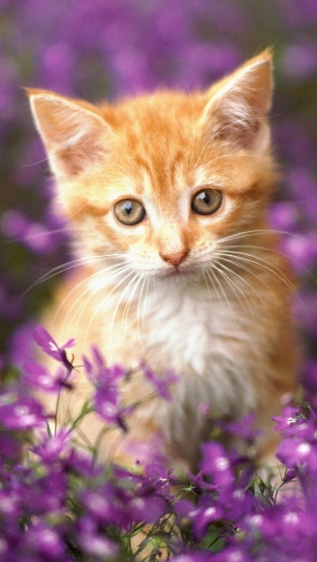 Wallpapers-For-iPhone-5-Animals-120-640×1136