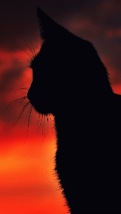 Wallpapers-For-iPhone-5-Animals-132-thumb-120×214