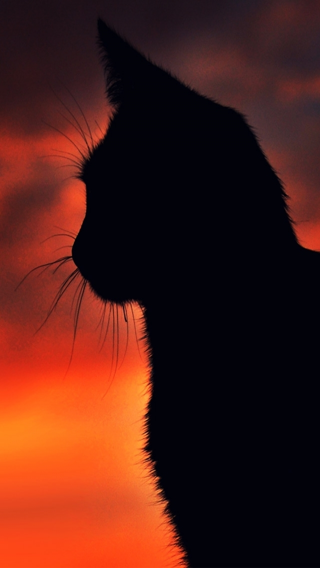 Wallpapers-For-iPhone-5-Animals-132-640×1136