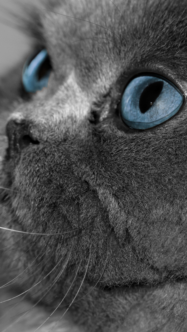 Wallpapers-For-iPhone-5-Animals-21-640×1136