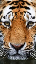 Wallpapers-For-iPhone-5-Animals-29-thumb-120×214