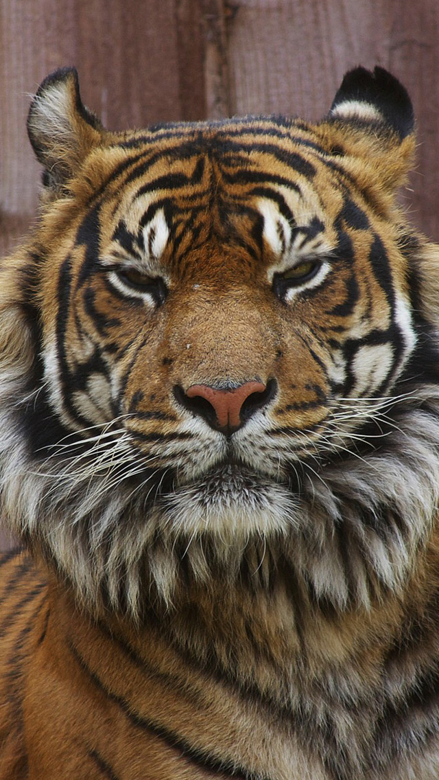 Wallpapers-For-iPhone-5-Animals-68-640×1136
