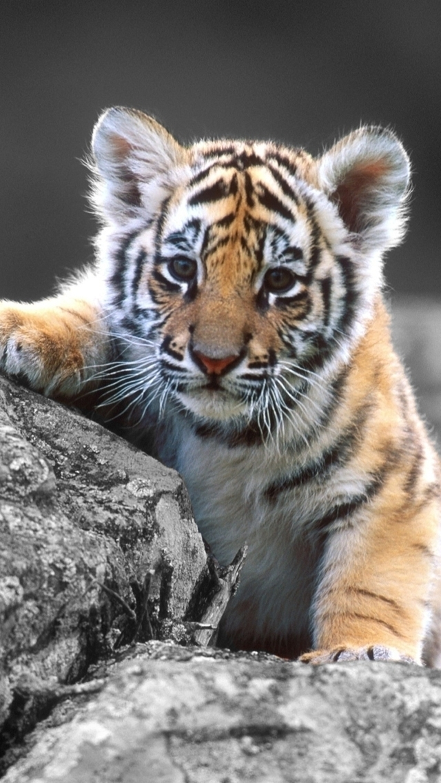 Wallpapers-For-iPhone-5-Animals-75-640×1136