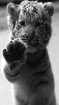 Wallpapers-For-iPhone-5-Animals-84-thumb-120×214
