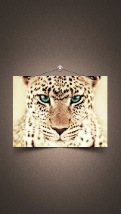 Wallpapers-For-iPhone-5-Animals-85-thumb-120×214