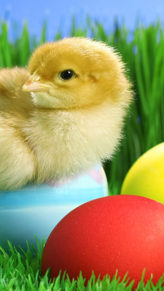 Easter Chick iPhone 5 wallpaper 640*1136