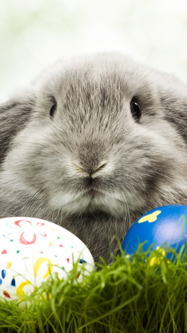 Easter bunny with eggs iPhone 5 wallpaper 640*1136