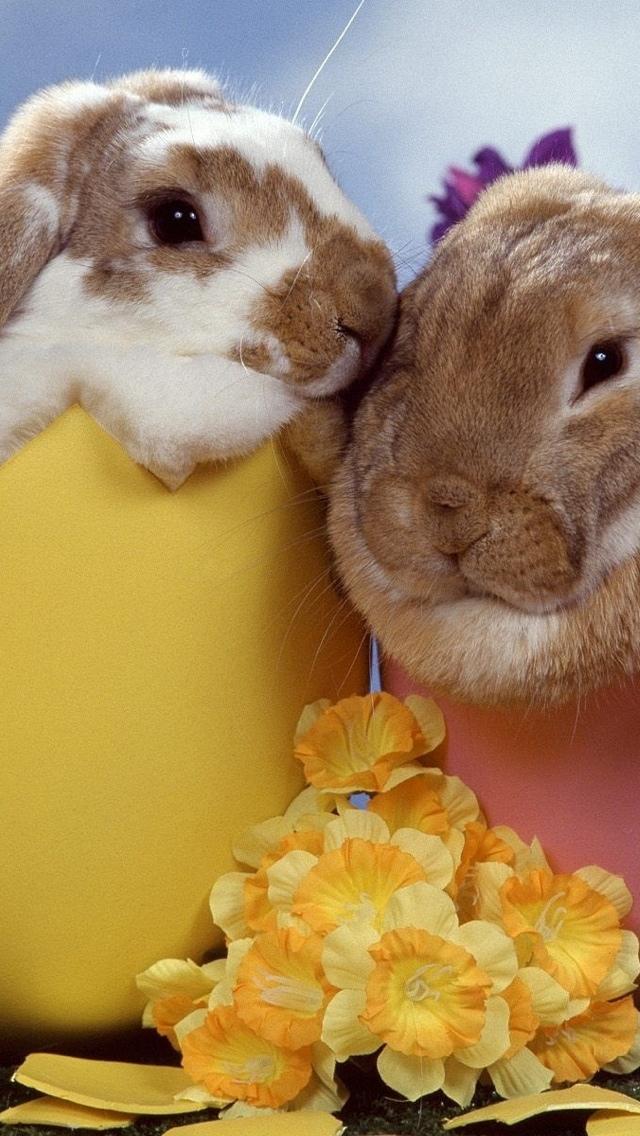 Easter Bunnies iPhone 5 wallpaper 640*1136