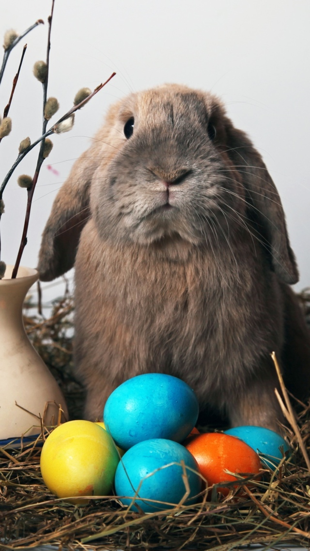 Easter Bunny iPhone 5 wallpaper 640*1136