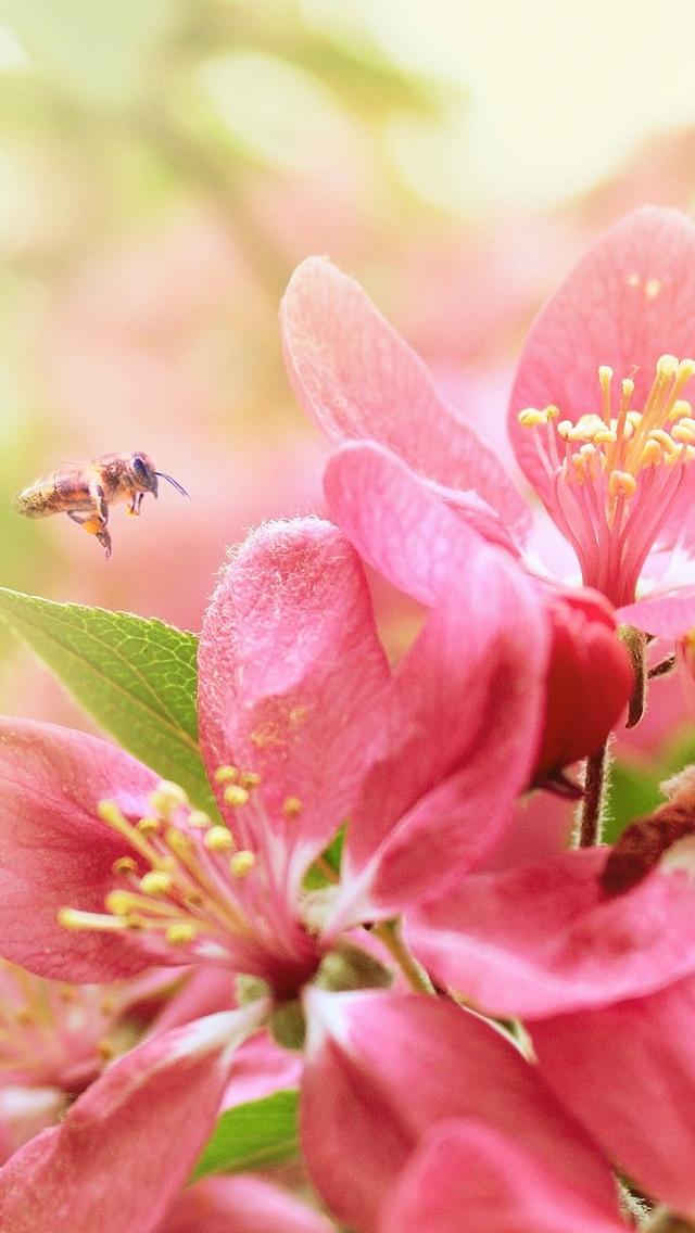 pink flowers iphone wallpaper 640*1136