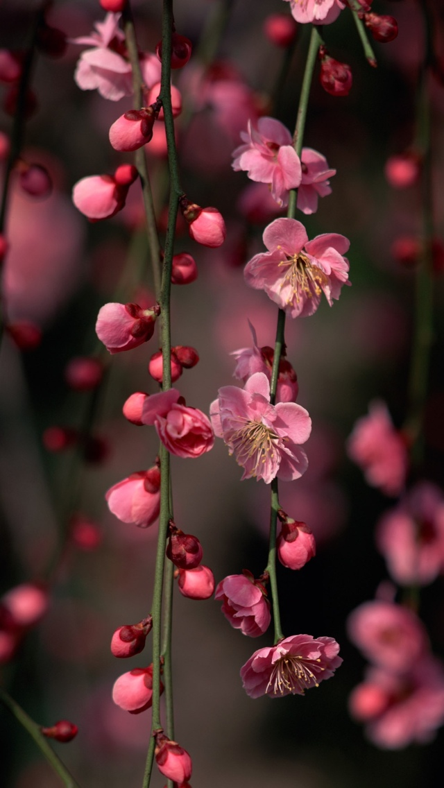 pink flowers on a branch iphone wallpaper 640*1136