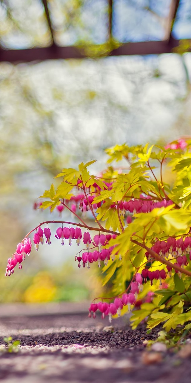 pink and yellow flowers free wallpaper iphone 640*1136