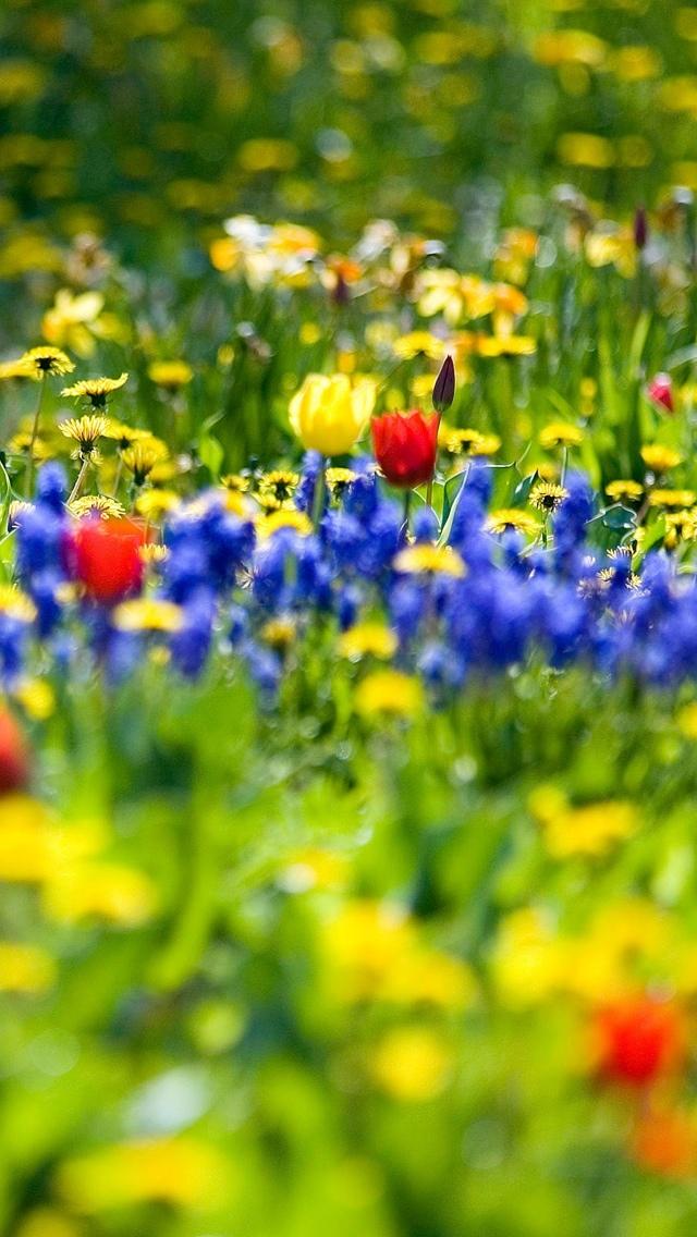 spring wallpaper iphone 640*1136