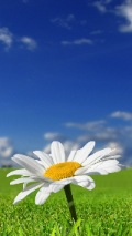 daisy flower iphone wallpaper 121*214