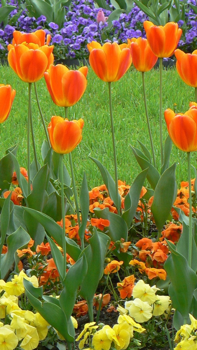 spring flowers iphone wallpaper 640*1136