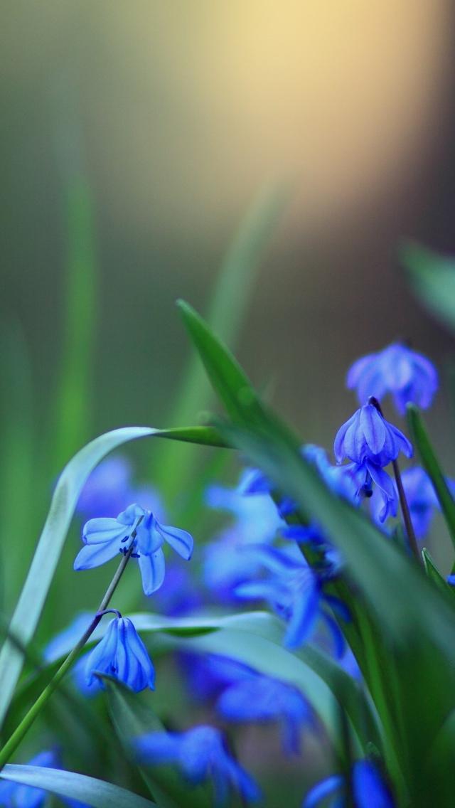 blue wild flowers iphone wallpaper 640*1136