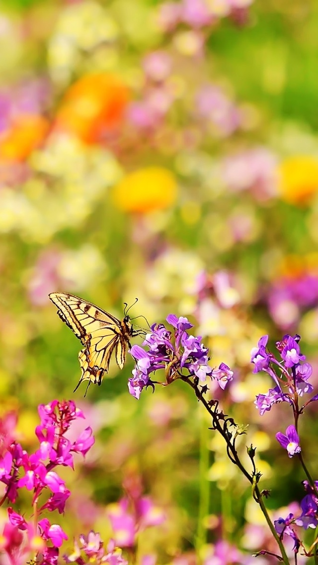 butterfly on a wild flowers iphone wallpaper 640*1136