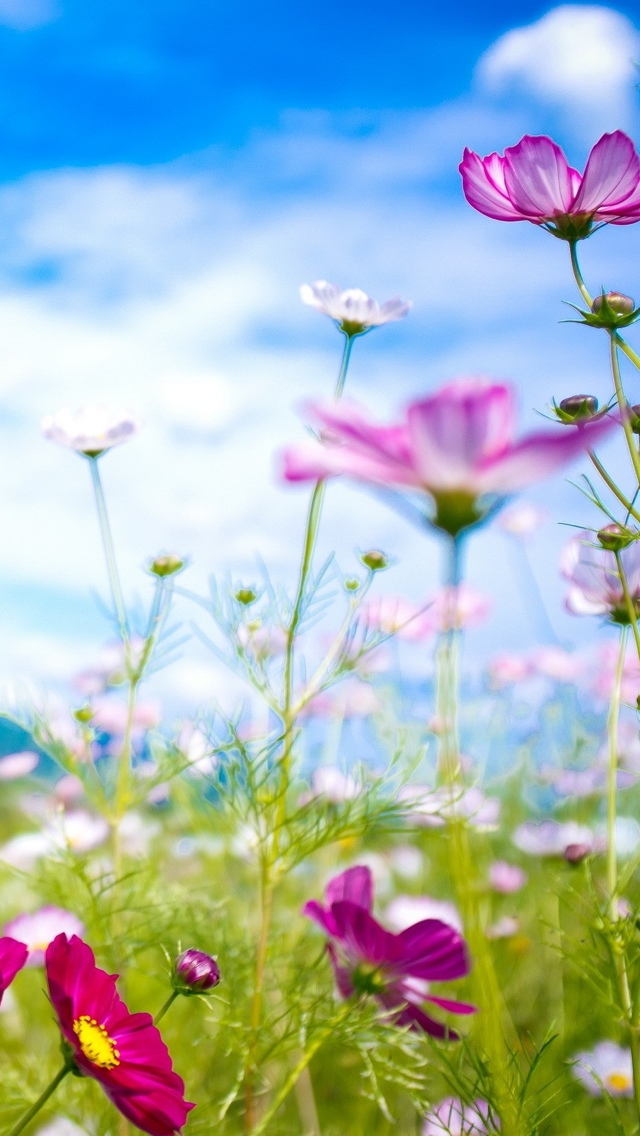 spring flowers in the field iphone wallpaper 640*1136