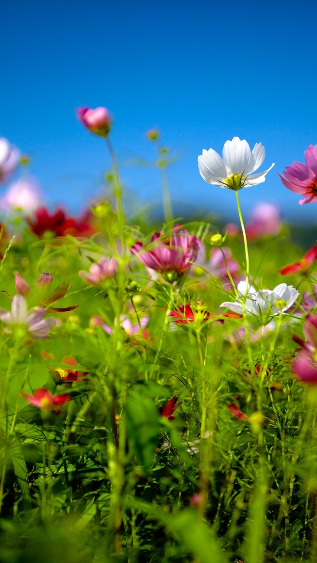 meadow wild flowers iphone wallpaper 640*1136