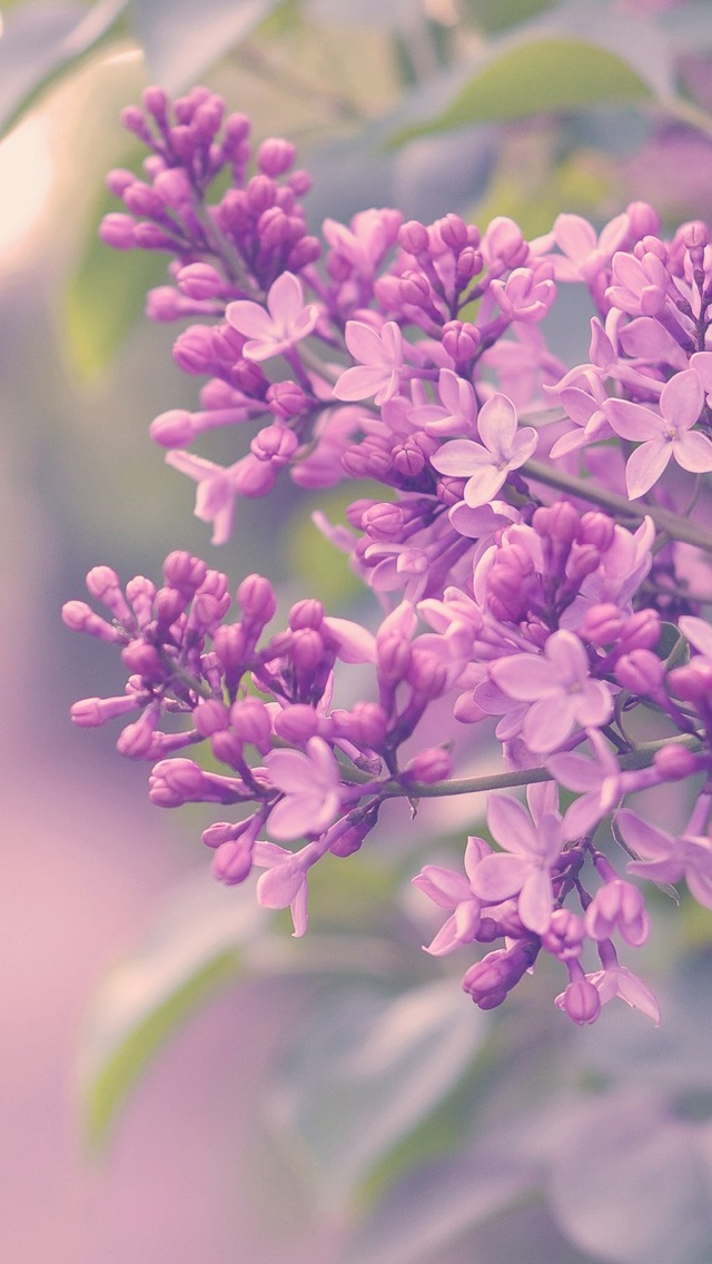 lilacs flowers iphone wallpaper 640*1136
