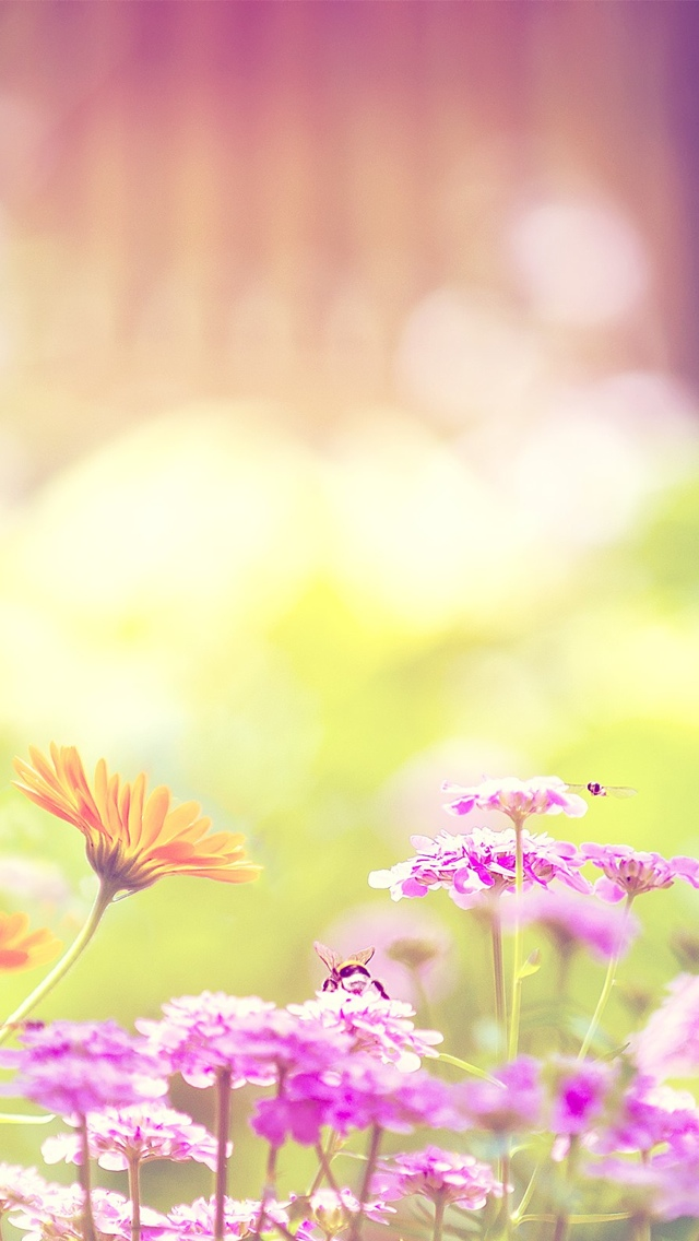purple and pink spring flowers iphone wallpaper 640*1136