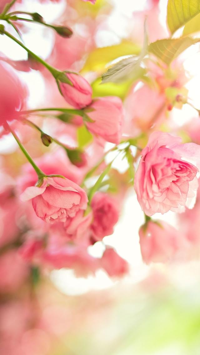 pink blossoming flowers wallpaper 640*1136