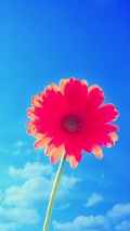 red flower with blue sky iphone 5 background