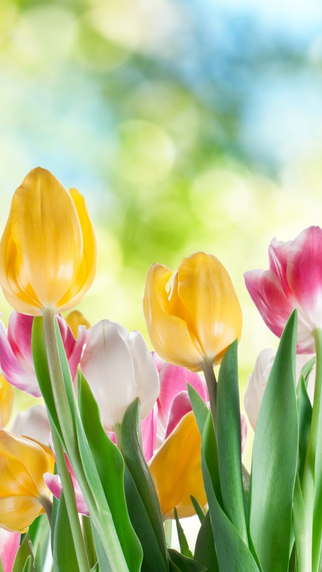 spring flowers free wallpaper iphone 640*1136