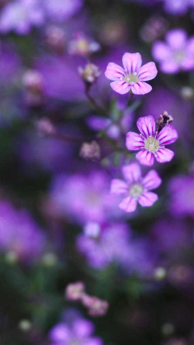 wild purple flowers iphone wallpaper 640*1136
