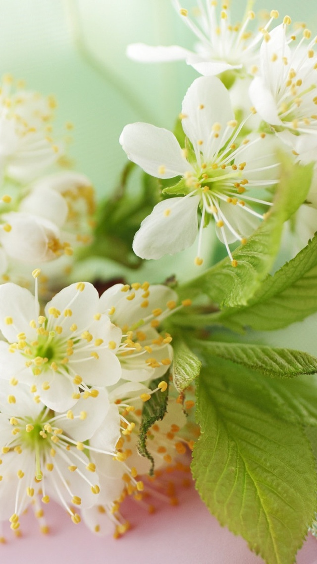 white flowers iphone wallpaper 640*1136