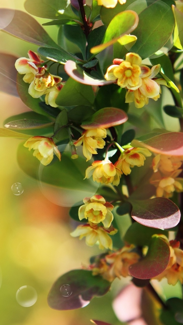 yellow orchid flowers free wallpaper iphone 640*1136