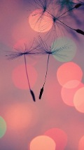 Wallpapers-For-iPhone-5-Girly-188-thumb-120×214