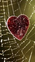 Wallpapers-For-iPhone-5-Love Red-Heart-Heart-Spiderweb-thumb-120×214