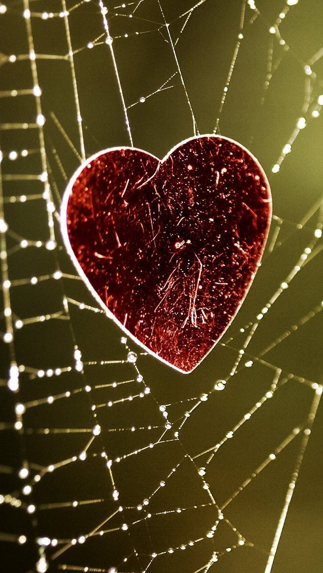 Wallpapers-For-iPhone-5-Love-Category-Red-Heart-Spiderweb-640×1136