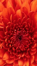 Wallpapers-For-iPhone-5-Nature-110-thumb-120×214