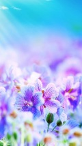 Wallpapers-For-iPhone-5-Nature-54-thumb-120×214