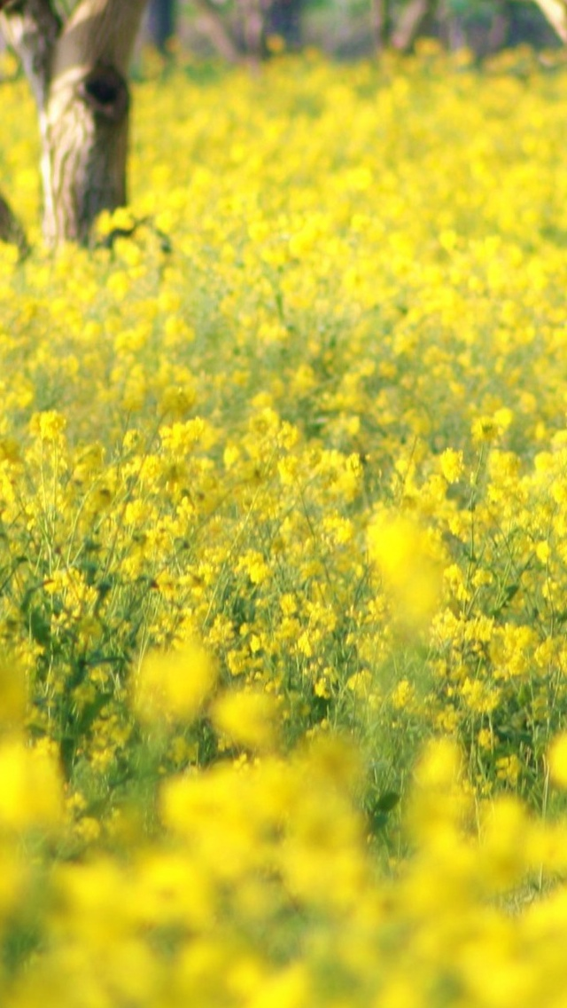 Yellow flowers Spring view iPhone 5 wallpaper 640*1136