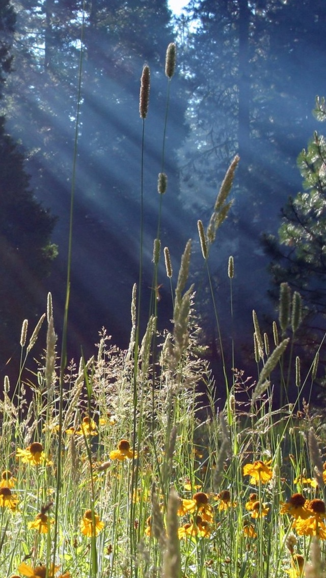 Field Spring view iPhone 5 wallpaper 640*1136