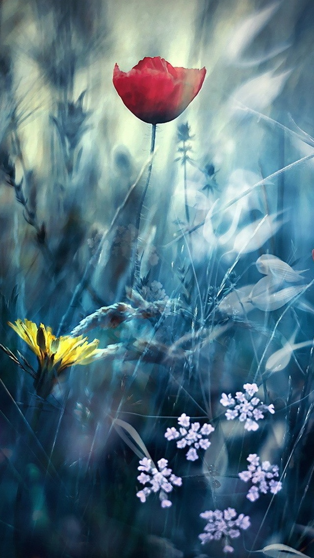 Spring view iPhone 5 wallpaper 640*1136