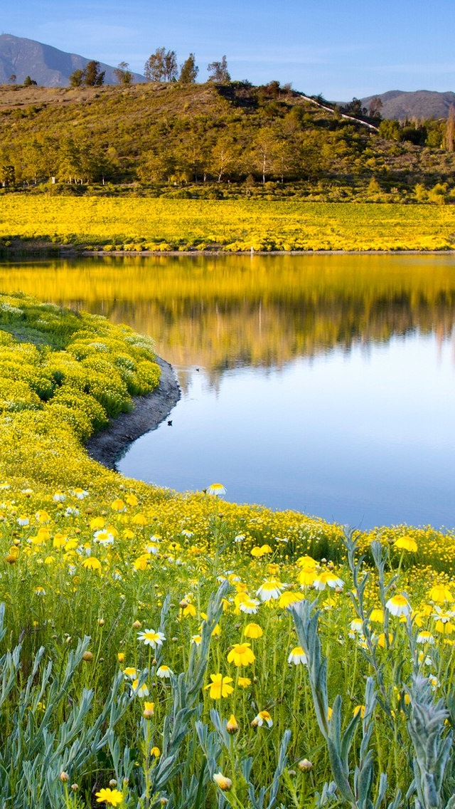 Spring field with yellow flowers iPhone 5 wallpaper 640*1136