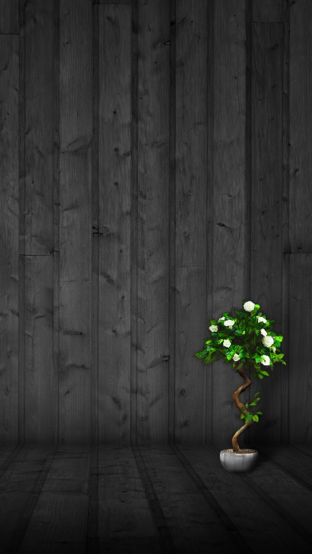 plant and black painted wood  iPhone 5 640*1136