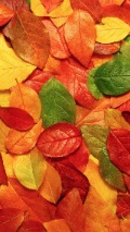 colorful-fall-leaves-autumn-texture