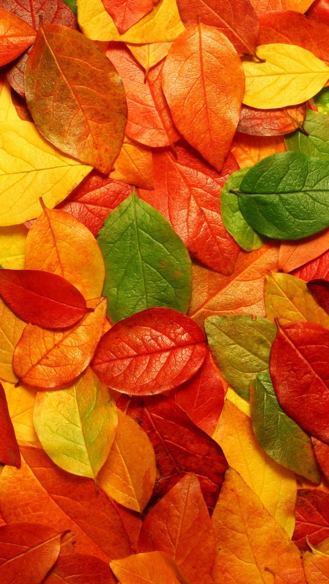 Leaves Texture Wallpaper iPhone 5 640*1136