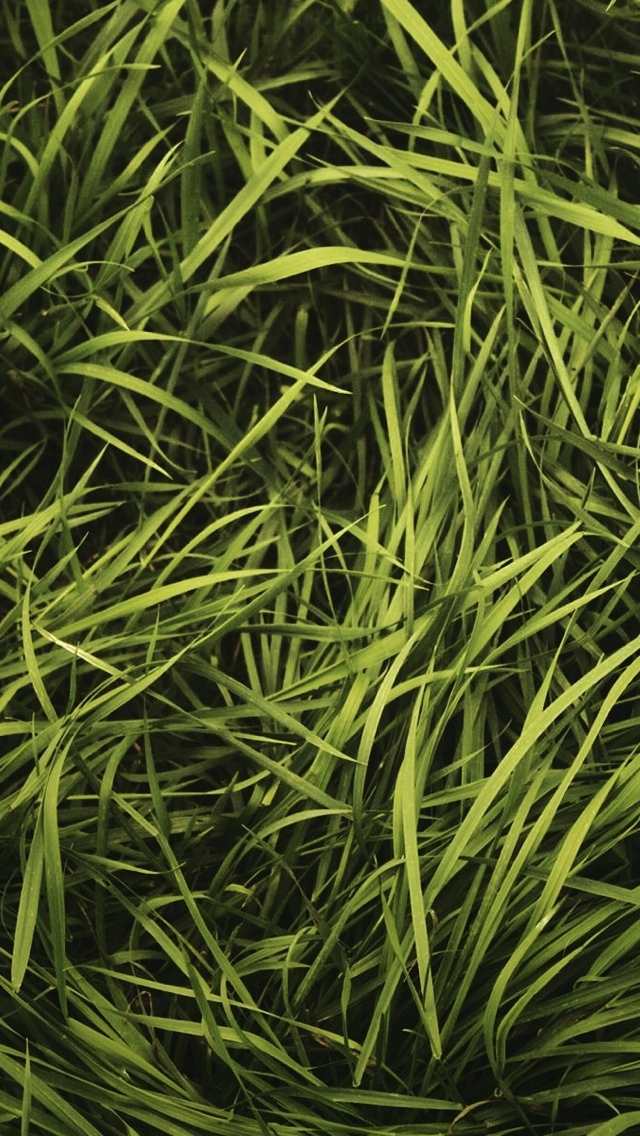 Grass Texture Wallpaper iPhone 5 640*1136