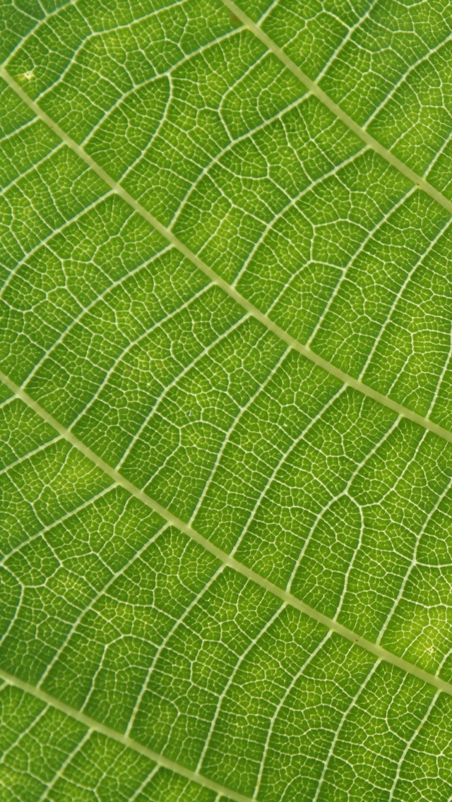 Leaf Texture Wallpaper iPhone 5 640*1136