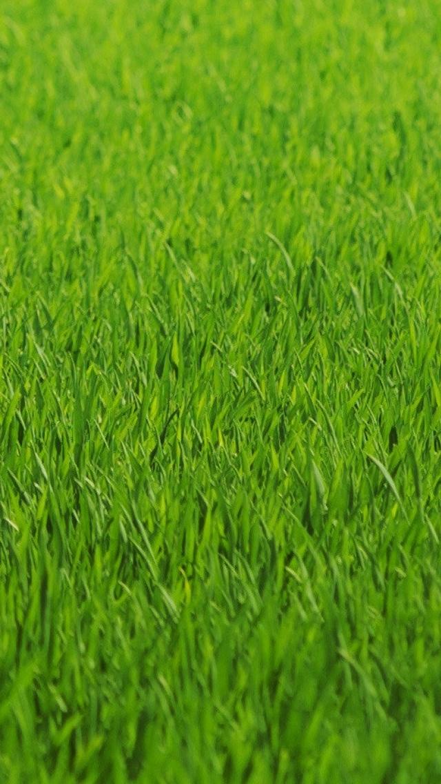Grass Texture Wallpaper iPhone 5 640*1136